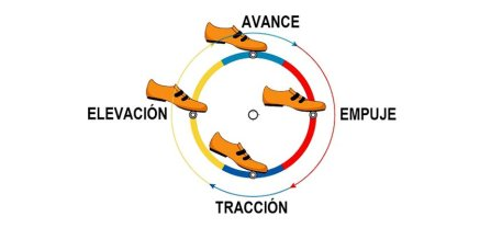 fases-del-pedaleo