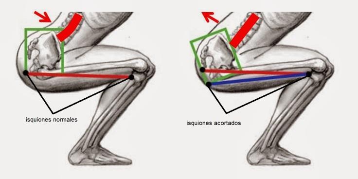 squat isquios