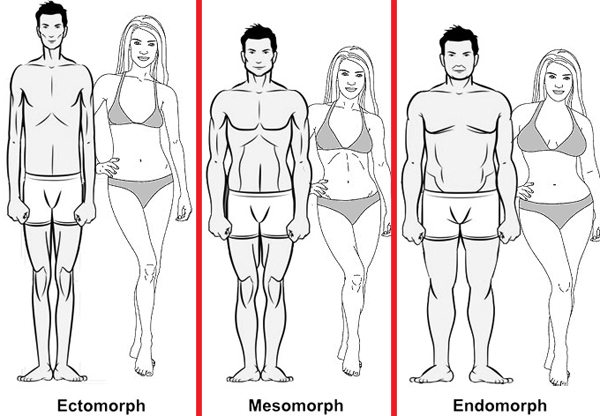 somatotypes_male-and-female