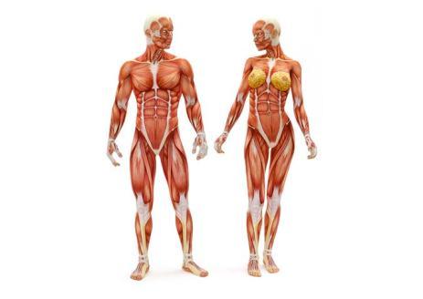postura-e-mal-di-schiena